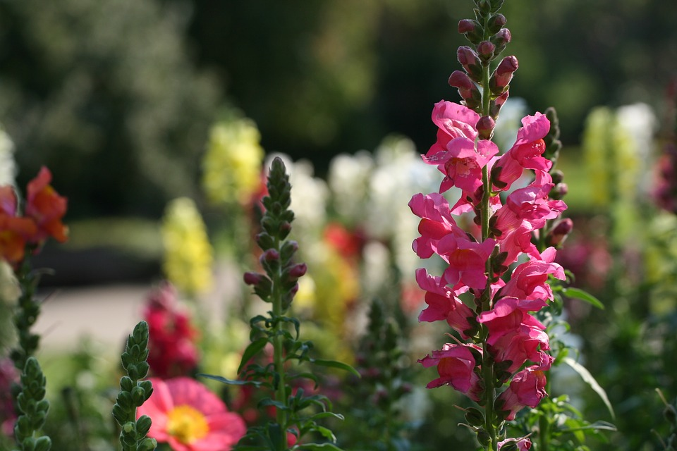 white-snapdragons-yellow-rose-1170704_960_720