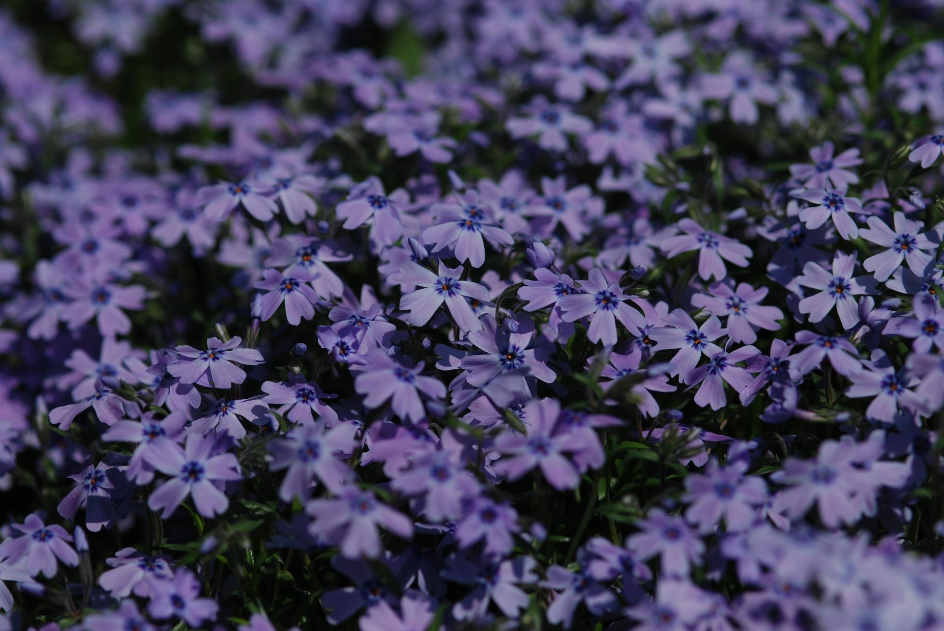 flowers-604016_1920