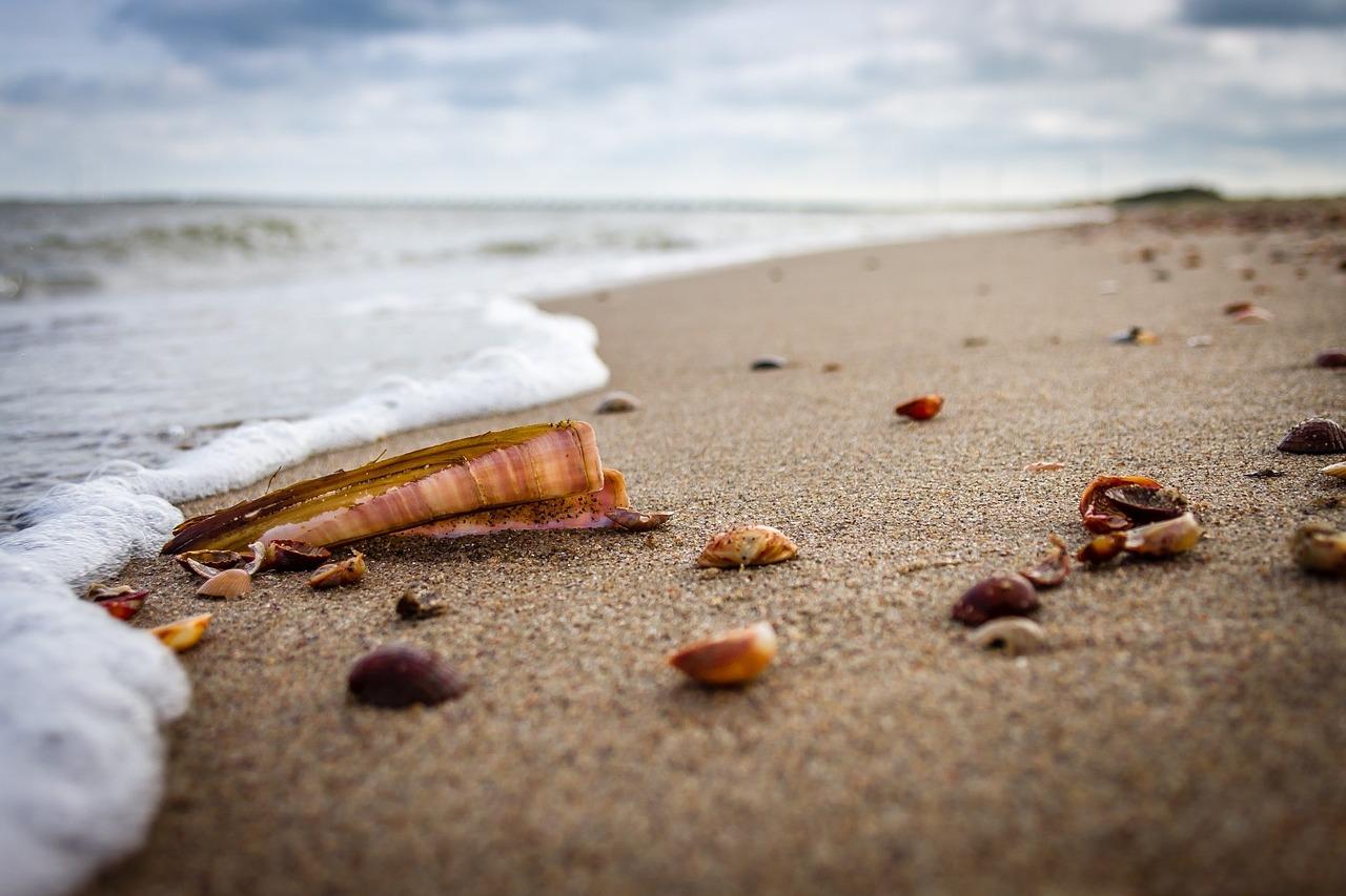 beach-917336_1280