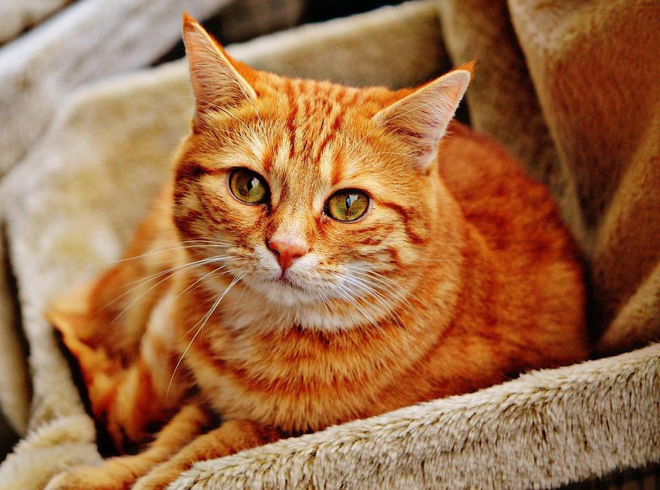 cat-1046544_960_720