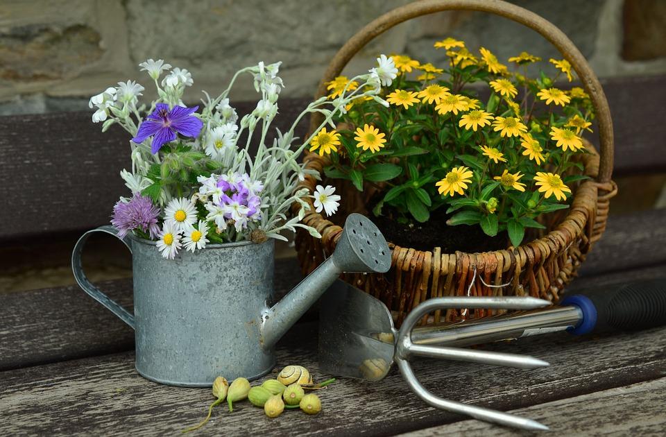 flowers-779317_960_720