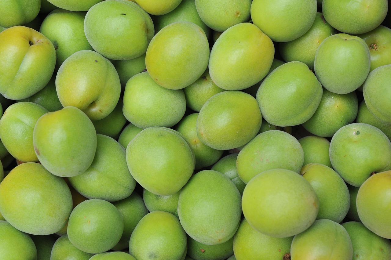 japanese-apricot-71162_1280