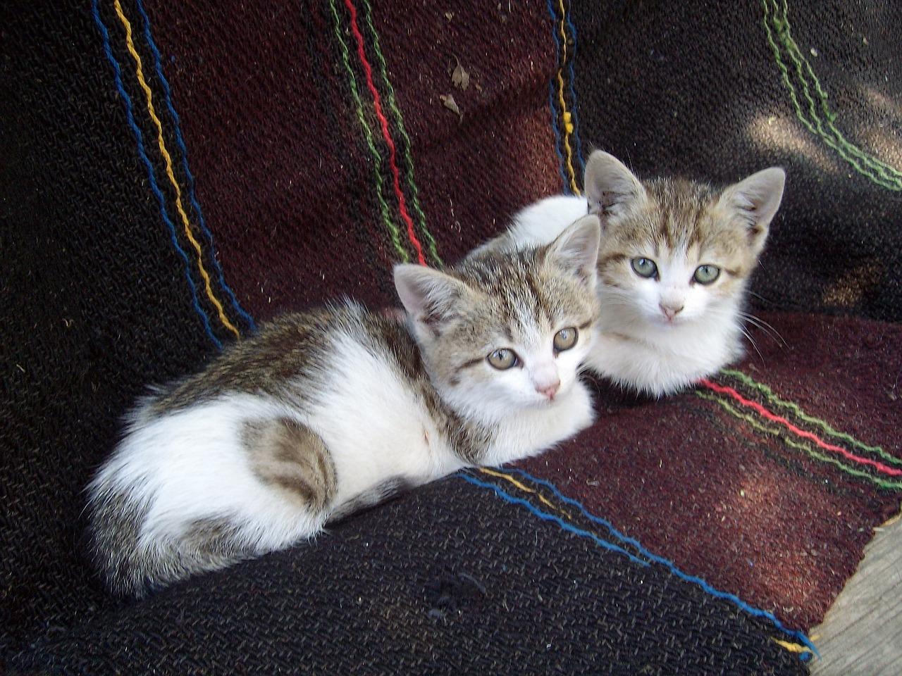 kittens-874773_1280