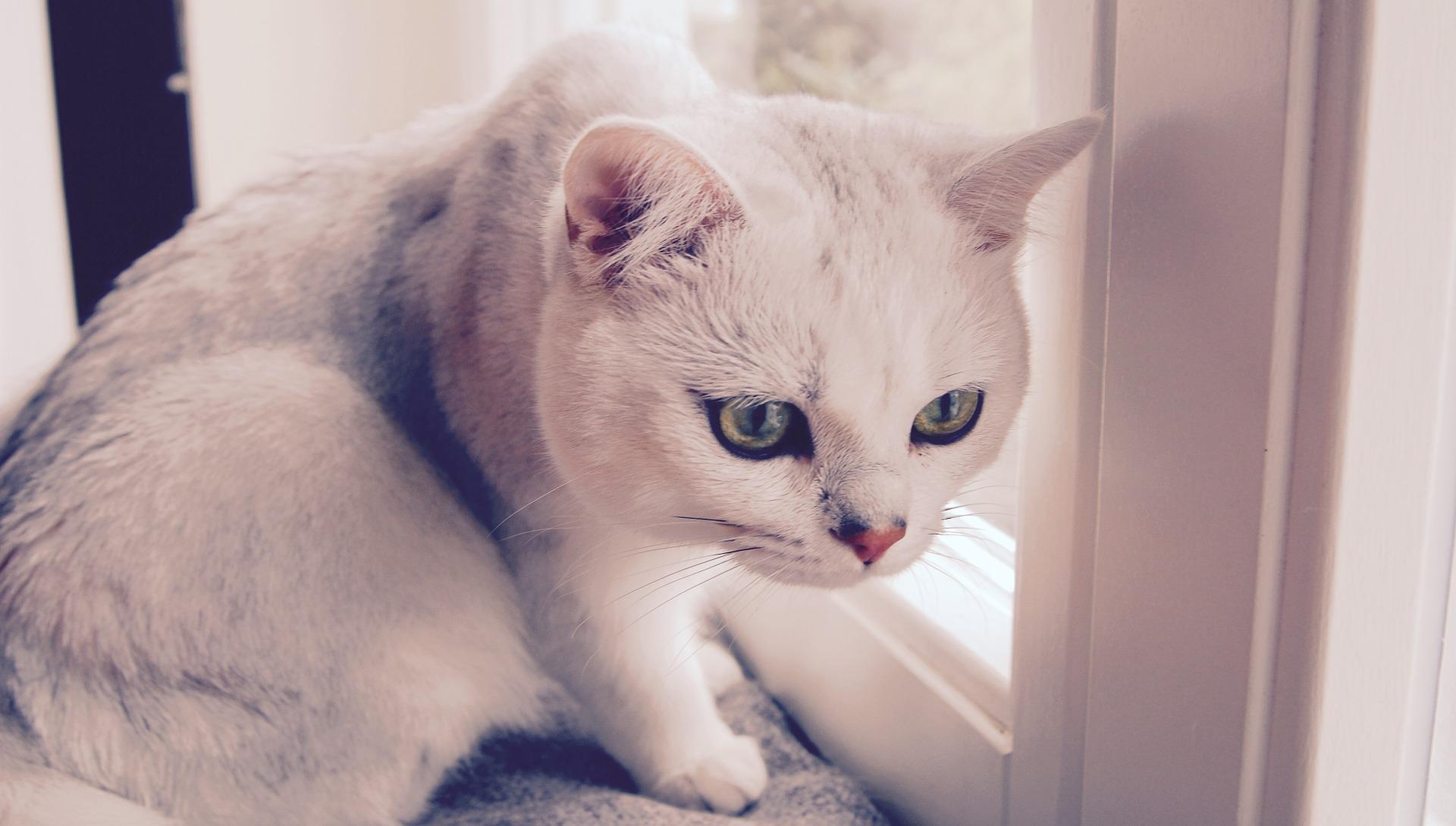 cat-758145_1920