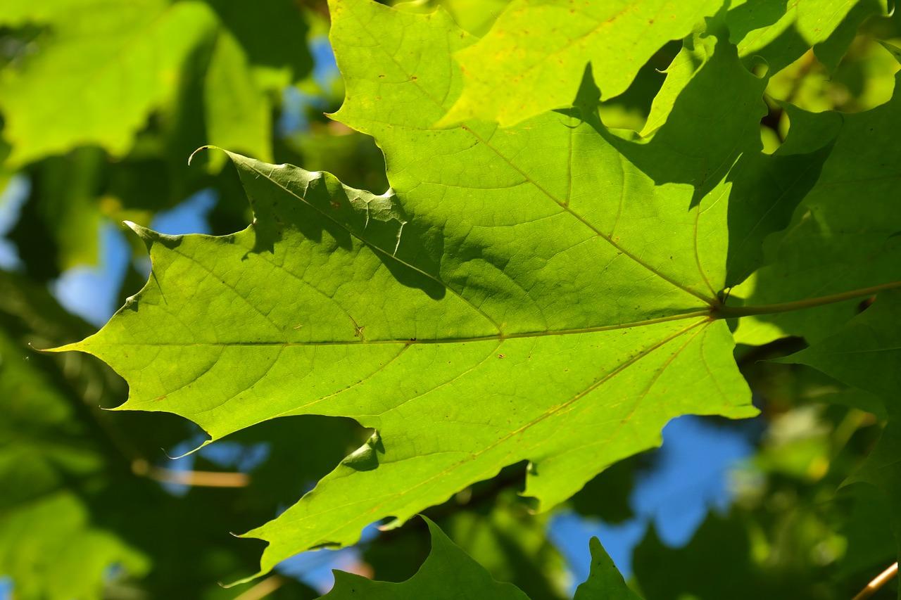 leaf-228059_1280